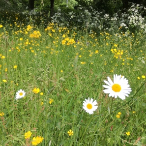 Wild flowers in the grounds