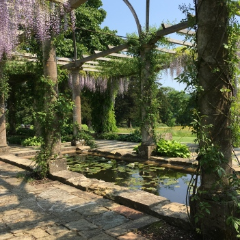 Wisteria in full-bloom over the lily pond in the college gardens