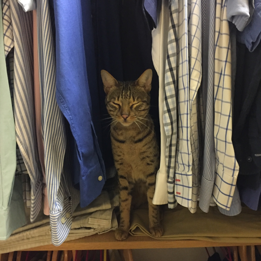 Bingley in the wardrobe